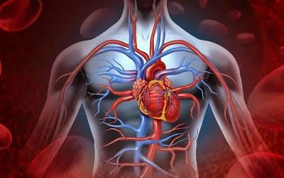 Заболевания сердечно-сосудистой системы - Алко-помощь