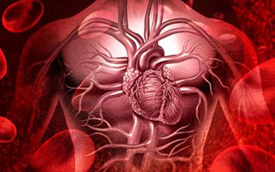 Стимуляции кровообращения - Алко - помощь